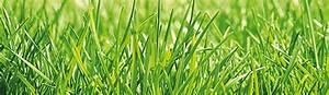 Was Hilft Gegen Klee Im Rasen : grabgestaltung ~ Watch28wear.com Haus und Dekorationen