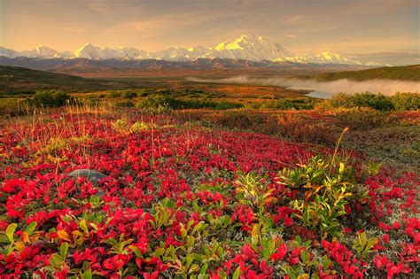 flower landscape images beautiful flowers wallpapers pixhome