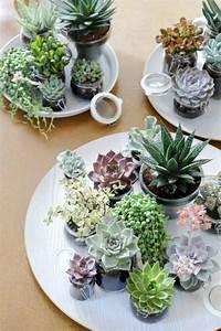 Zimmerpflanzen Feng Shui : feng shui pflanzen ber die schutz und komfortfunktion der zimmerpflanzen ~ Indierocktalk.com Haus und Dekorationen