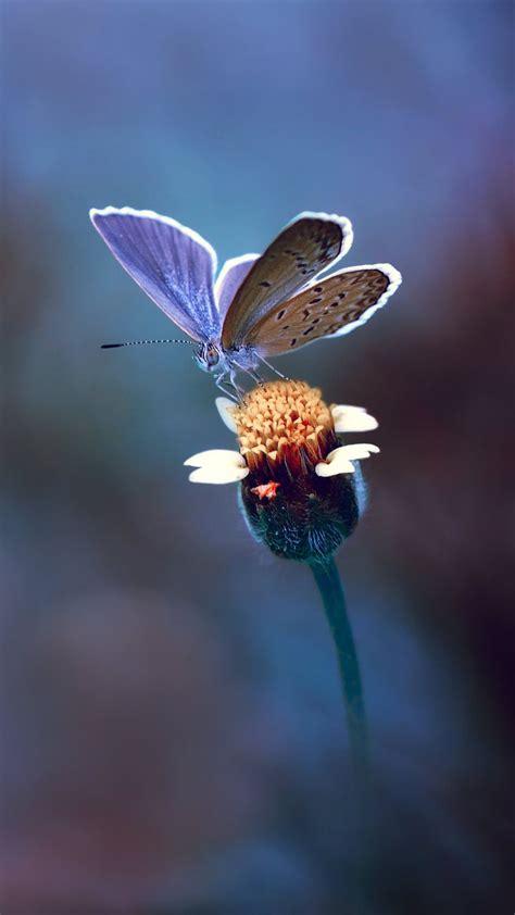 wallpaper butterfly yellow flower macro hd photography