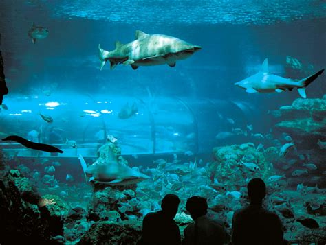 adresse de l aquarium de barcelona s 10 most visited tourist attractions friendly rentals