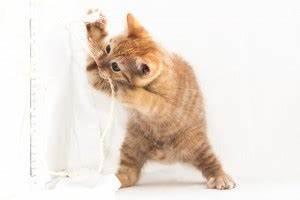 Een kitten opvoeden kittenleeftijd
