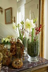 lovely paperwhites and holly berries traditional home With tapis chambre bébé avec fleurs a bulbe amaryllis