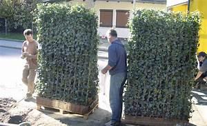 hecke pflanzen sichtschutz selbstde With garten planen mit künstliche hecke balkon