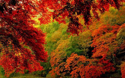Die 72+ Besten Herbstliche Natur schöne Hintergrundbilder