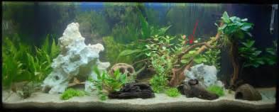 aquarium kies schwarz bakterienrasen und kies f 228 rbt sich schwarz aquaristik sonstiges aquarium stammtisch