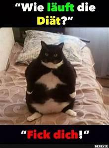 Wie Fange Ich Eine Katze : die besten 17 ideen zu di t witze auf pinterest essen meme lol und memes ~ Markanthonyermac.com Haus und Dekorationen