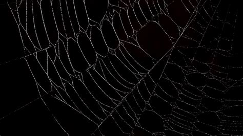 Background Spider Web by Spiderweb Backgrounds Wallpaper Cave