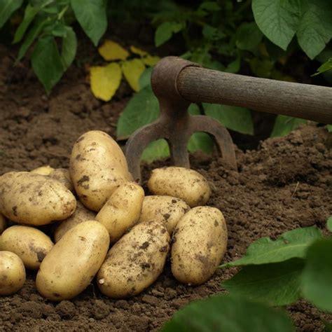 r 233 ussir la culture de la pomme de terre ferme de sainte