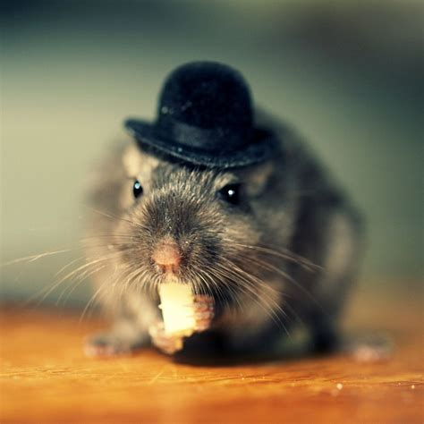 Greeting Card Set Gerbil In A Bowler Hat Folded Photo Note