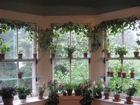 Indoor Window Garden by Bringing Houseplants Indoors