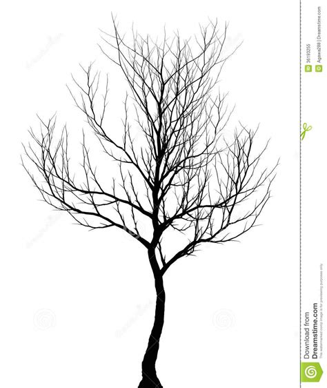 tree simple dark silhouette isolated royalty  stock