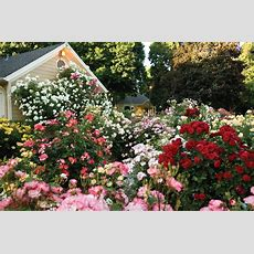 How To Grow A Modernday Cottage Garden