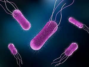 Scientists figu... Salmonella