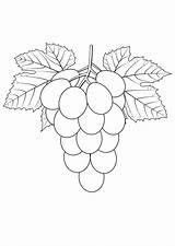Grapes Coloring Pages Print Raskraska Vinograd Fruits Coloringtop sketch template