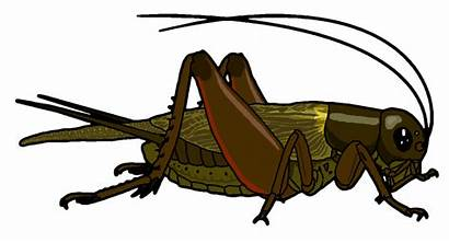 Cricket Clipart Insect Bug Field Clip Misterbug