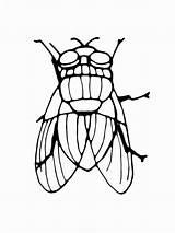 Fly Coloring Fliege Ausmalbilder Printable Ausdrucken Malvorlagen Kostenlos sketch template