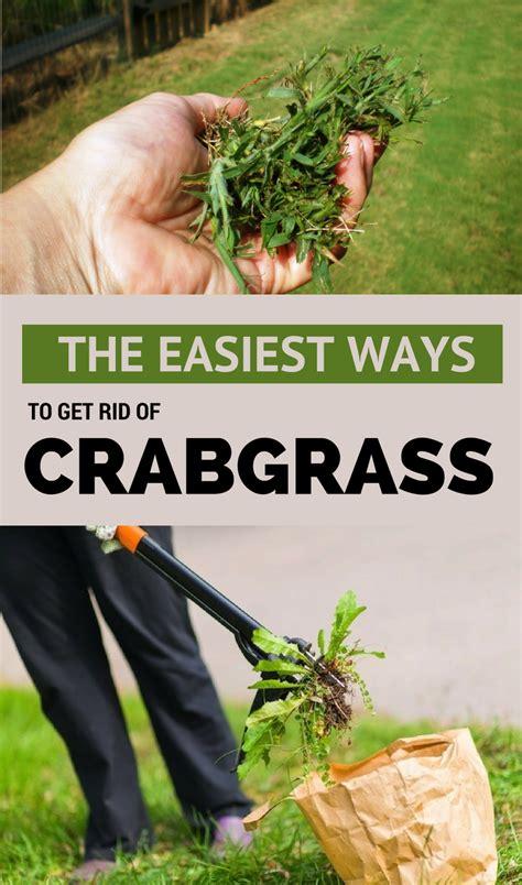 easiest ways   rid  crabgrass getgardentipscom