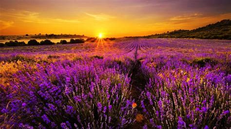 flower meadow  sunset wallpapers wallpaper cave