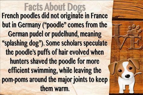 Dog Facts #dogs #facts | Dog facts, Facts, Fun facts