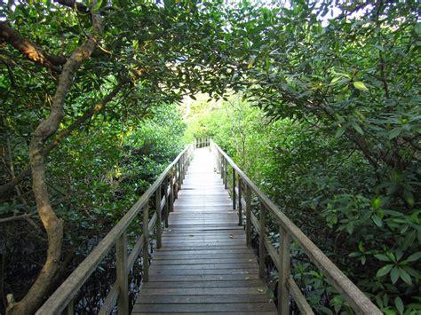 dimensi lain  hutan bakau bali ardian nugroho