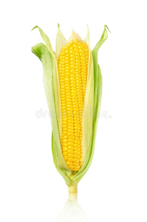 ear  corn isolated   white background stock image
