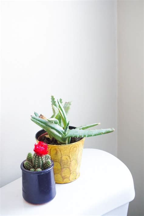 Best Plants For Bathroom Australia by Best Plants For Bathrooms Popsugar Home Australia