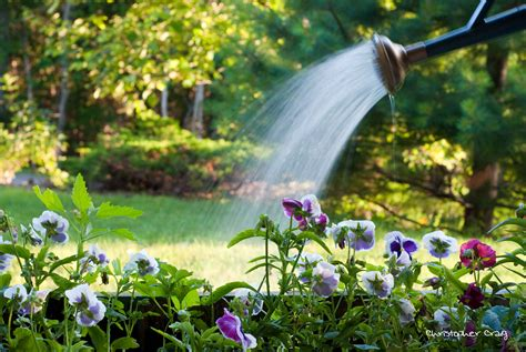 Tips Conserving Water When Gardening