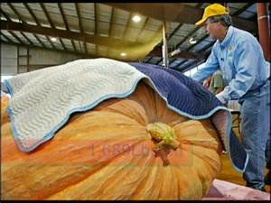 HEAVIEST FRUIT EVER GROWN!-Tribute to the Giant Pumpkin ...