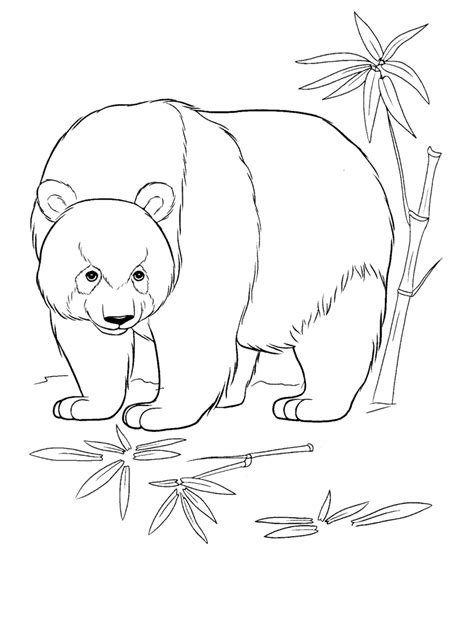 urs panda planse de colorat  educative