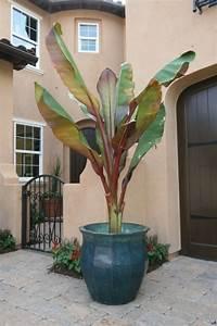 plante exterieur en pot sans entretien sedgucom With marvelous photo amenagement terrasse exterieur 5 decoration montee descaliers