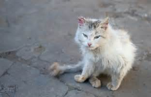 ferrel cat who feed stray and feral cats make me mad catster