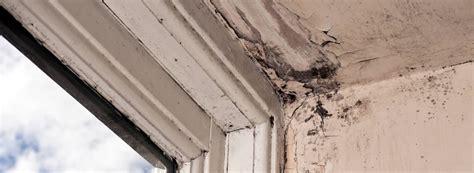 damp proofing expert  rentokil property care