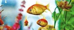 Welche Fische Passen Zusammen Aquarium : fische zierfische guide fressnapf ~ Lizthompson.info Haus und Dekorationen