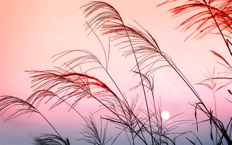 pastel hd wallpapers background images wallpaper