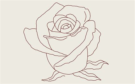 draw  rose  step  step guide thought catalog