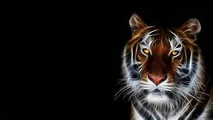 Cool Animal HD Wallpaper - WallpaperSafari