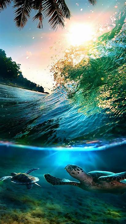 Tropical Island Fish Backgrounds Wallpapers Abstract Sea