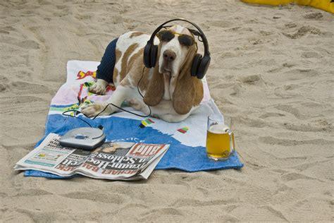 endlich urlaub foto bild tiere haustiere hunde
