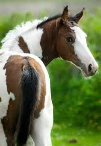 Beautiful Foal Horses
