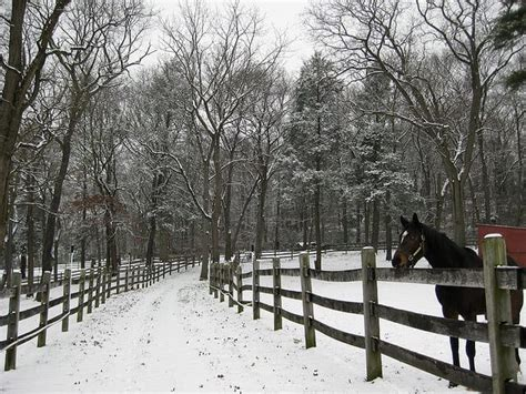 cold weather horse winter caring tips durkin mike flickr horses ihearthorses via source optimal keeping weight hay plenty provide cc