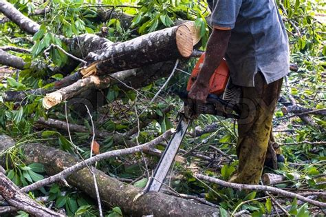 Man Cutting Trees Using An Electrical Chainsaw And