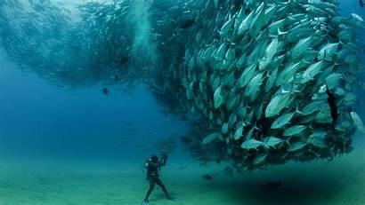 Lot Fishes 4k Fish Wallpapers Mobile Desktop