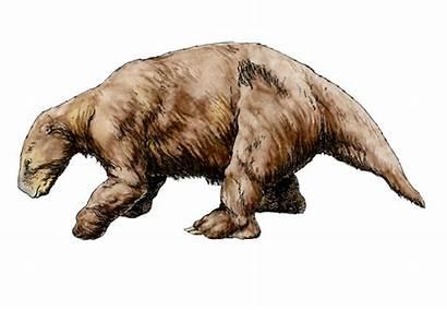Sloth Ago Camelops Hesternus Million Camel Extinct