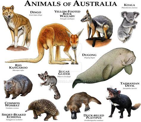 The 25+ best Australia animals ideas on Pinterest Quokka