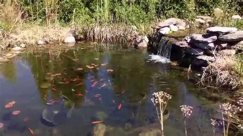 bassin de jardin am 233 nager un bassin ext 233 rieur avec cascades