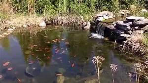 Jardin Avec Bassin : bassin de jardin am nager un bassin ext rieur avec cascades youtube ~ Melissatoandfro.com Idées de Décoration