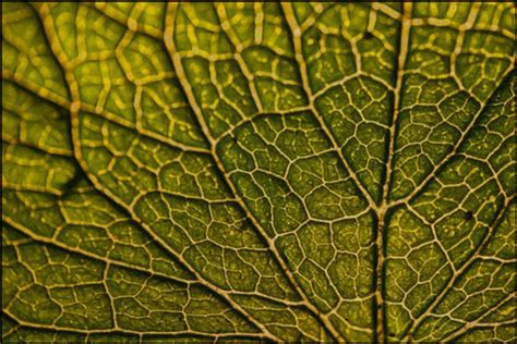 high resolution leaf textures webdesigner depot