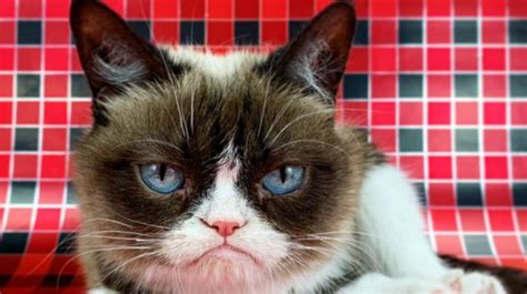 Gone But Not Forgotten The Aftermath Of Grumpy Cats