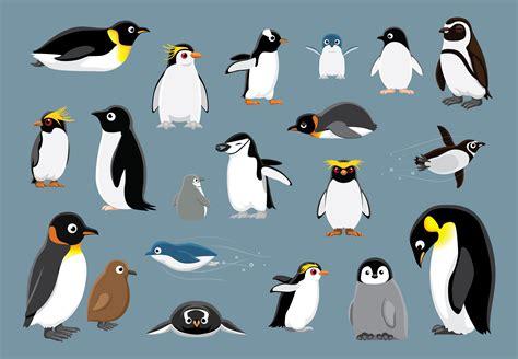 Vector Cartoon Penguins